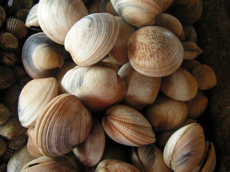 What Causes Shellfish Allergy Shellfish Allergy Symptoms