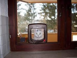 Türschutzgitter Mit Katzenklappe : katzenklappe in glast r m glich katzen forum ~ Whattoseeinmadrid.com Haus und Dekorationen