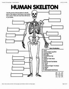 Human Anatomy For Beginners
