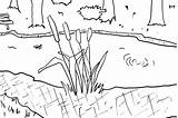 Pond Coloring Cattails Habitat Daily Kerra Designlooter Clipart sketch template