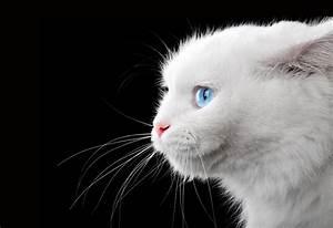Was Kann Man Tun Wenn Die Waschmaschine Stinkt : was kann man tun wenn die katze nicht aufh rt zu bei en tierheilkunde ~ Markanthonyermac.com Haus und Dekorationen