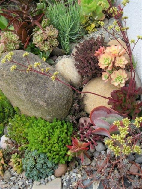 succulent rock garden succulents