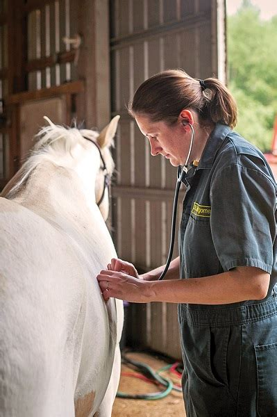 studying  airway microbiome  horses horse journals