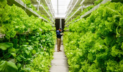 Can Vertical Farming Be the Answer to Sustainable ...