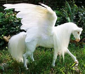 Pix For > Real Pegasus Found | Pegasus | Pinterest ...