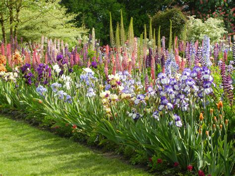 ideal companions for your bearded iris beds for the