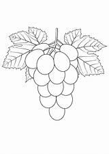 Grapes Coloring Pages Raskraska Vinograd Fruits Coloringtop sketch template