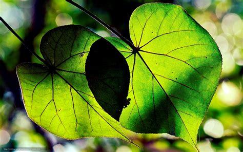 fond d 馗ran de bureau tlcharger fond d 39 ecran macro arbres forme feuilles fonds d 39 ecran gratuits pour votre rsolution du bureau 1920x1200 image 571026
