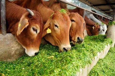 maharashtra govt plans  protection push livemint