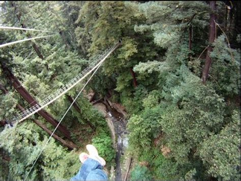 redwood canopy tours ziplining at redwood canopy tours in santa tour