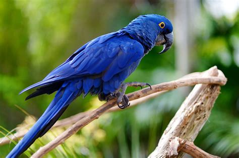 28 Amazing Blue-colored Animals With Insanely Beautiful