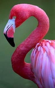 25+ best ideas about Flamingo painting on Pinterest ...