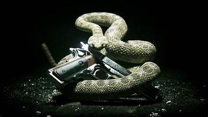 Gun Snake Wallpapers Animals Serpent Computer Desktop