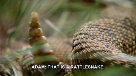 Jack Hanna's Wild Countdown: Why in the World