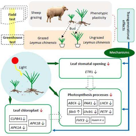 Plant Adaptation Stomata Diagram