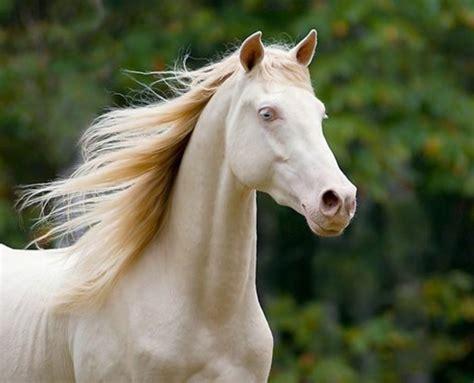 süße pferde bilder mehr als 70 sch 246 ne pferde bilder archzine net