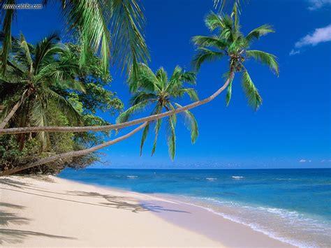 Nature Kadavu Island Fiji Picture Nr 17365