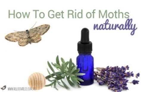 how to get rid of moths naturally hello