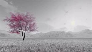 Black And White Fantasy Spring Scenery With Single Pink ...