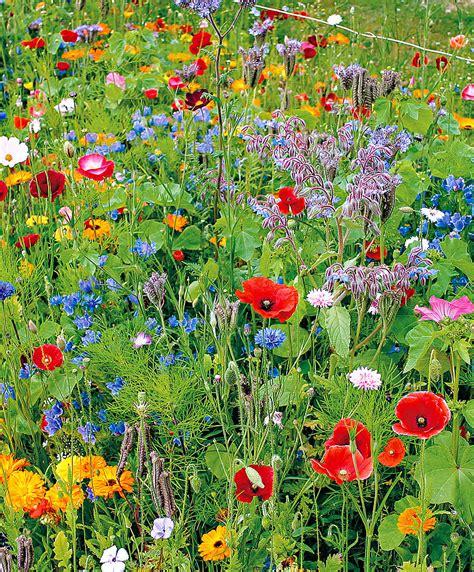 Wildblumen Im Garten by Kaufen Sie Jetzt Blumensaat Wildblumen Beet Gemischt