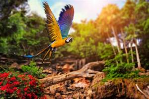 Macaw Parrot HD Wallpapers | Macaw Pictures HD Images – HD ...