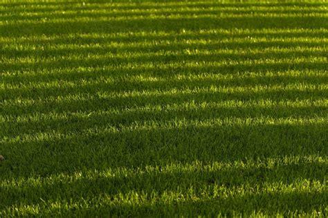 Wann Soll Den Rasen Vertikutieren by Rasen Vertikutieren Wir Zeigen Wie Es Richtig Geht Plantura