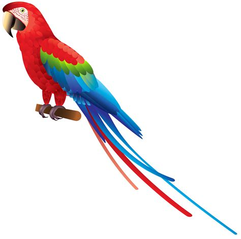 Parrot Clip Macaw Clipart Colourful Bird Pencil And In Color Macaw