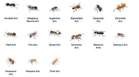 rid  ants permanently   hours