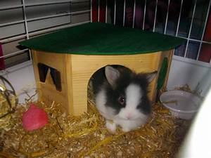 Maison Pour Lapin : lapin a la maison avie home ~ Premium-room.com Idées de Décoration