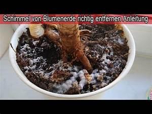 Schimmel In Wohnung Was Tun : blumenerde schimmelt was tun schimmel im blumentopf auf ~ Watch28wear.com Haus und Dekorationen