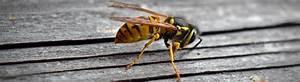 Was Hält Wespen Fern : wespen fern halten kammerj ger ratgeber ~ Whattoseeinmadrid.com Haus und Dekorationen