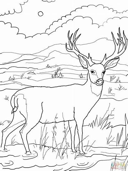 Coloring Deer Pages Hunting Printable Mule Quail