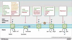 Oxidative Phosphorylation As An Emerging Target In Cancer