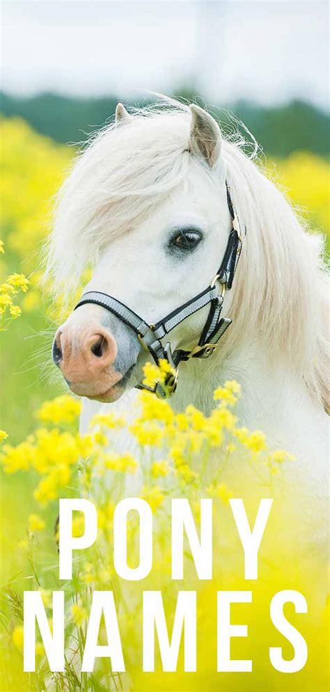 names pony horse cute amazing boys unique naming few tips help