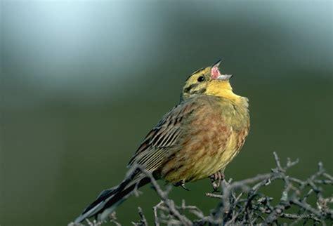 birds kanlayaneeteacherkatie