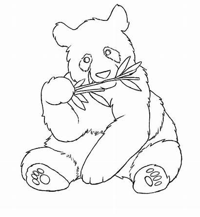 Panda Coloring Pages Bear Pandas Colouring Drawings