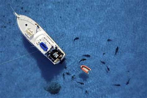 Sinking Boat Surrounded By Sharks by Ways To Survive A Shark Attack When Dead Can Keep
