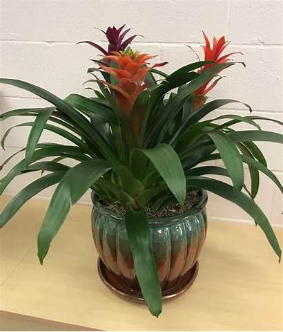 Tropical Plants Floral