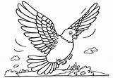 Coloring Pigeon Pages Kindergarten sketch template