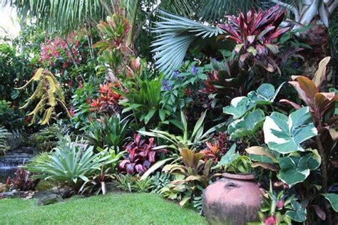 tropica garden dennis hundscheidt tropical garden sunnybank qld exotic pinterest gardens tropical