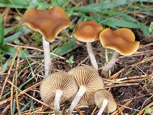 Mushroom Prints | magic mushroom spore syringes and spore ...