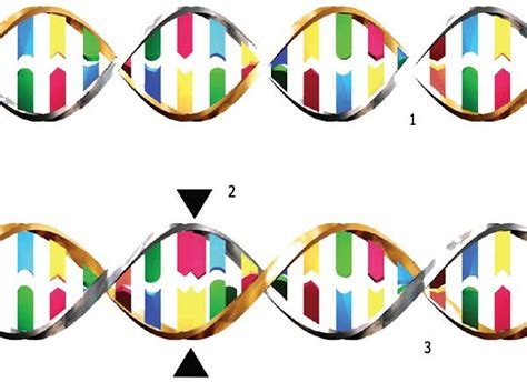 Modification Utation by Gene Therapy The Human Genome And Genetic Engineering