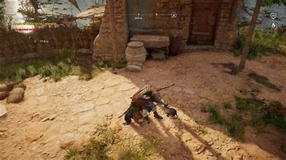 Creed Origins Assassin Cats Pet Reddit Very