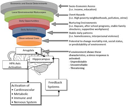 psychosocial environment  collaborative  health