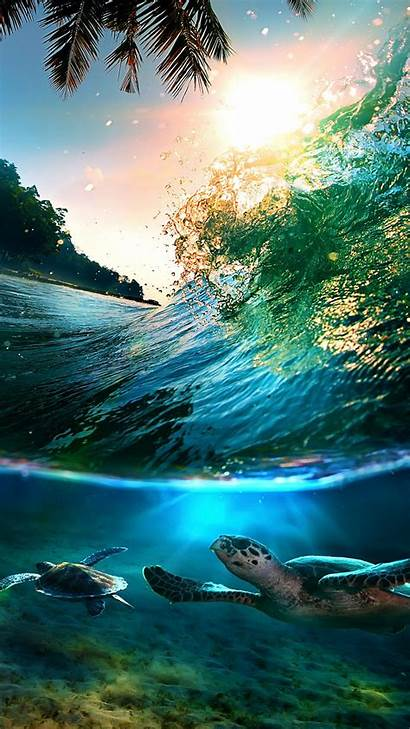 Sea Backgrounds Turtle Turtles Wallpapers Htc Tropical