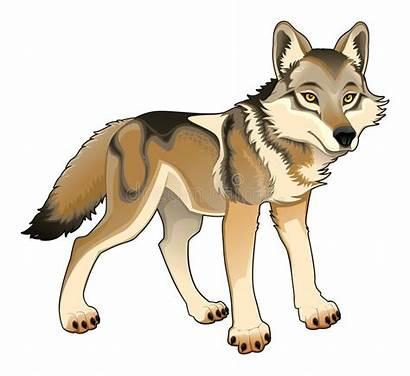 Wolf Character Vector Isolated Cartoon