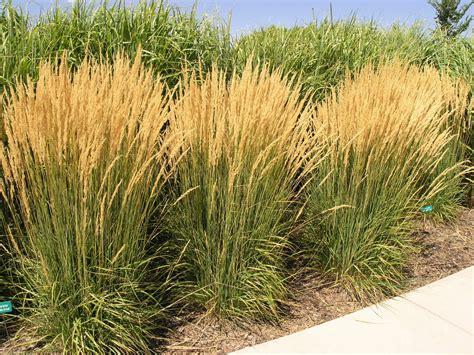 perennial grass plants the diy landscaper part i sunnyside gardens