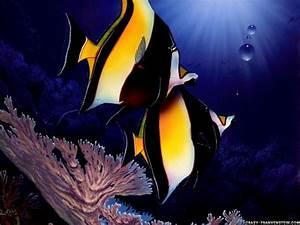 All new wallpaper : beautiful fish wallpaper