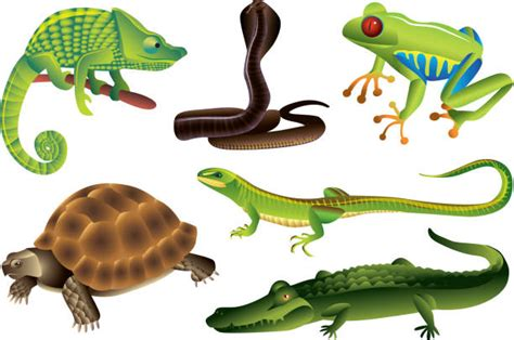 Best Reptiles Illustrations Royalty Free Vector Graphics