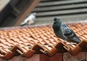 tauben effektvoll aber schonend vertreiben With garten planen mit tauben vom balkon fernhalten